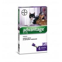 Bayer advantage 80 spot-on gatti e conigli oltre 4 Kg