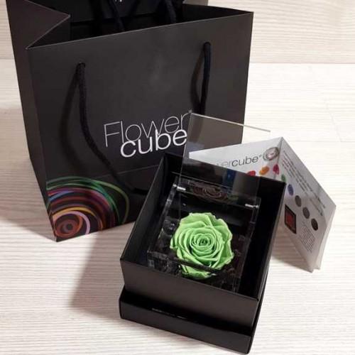 Rosa vera stabilizzata FlowerCube cubo 8x8 cm verde