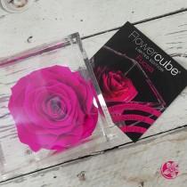 Rosa vera stabilizzata FlowerCube cubo 8x8 cm