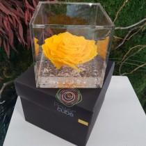 Rosa vera stabilizzata FlowerCube cubo 8x8 cm giallo