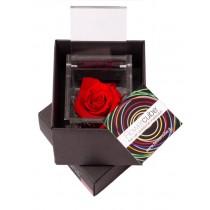 Rosa vera stabilizzata FlowerCube cubo 8x8 cm rosso