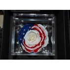 Rosa stabilizzata USA Flowercube 8x8 cm