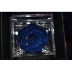 Rosa stabilizzata Europa Flowercube 8x8 cm