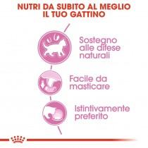 Royal Canin Kitten sterilised jelly 85 grammi confezione da 12 cibo umido per gatti