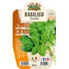 Pianta Basilico Orto Mio varietà italiana genovese vaso 14
