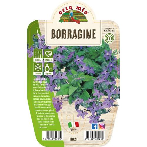 Pianta aromatica Borragine V14 Orto Mio