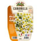 Pianta aromatica Camomilla Orto Mio vaso 14