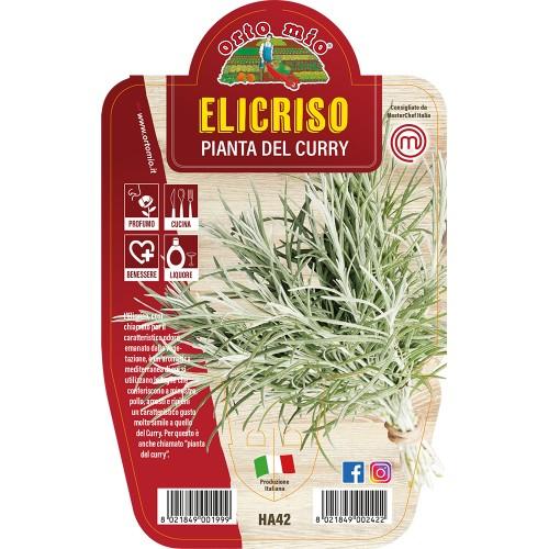 Piante aromatiche Orto Mio elicriso piana del curry vaso 14