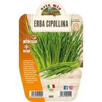 Pianta aromatica Erba cipollina V14 Orto Mio