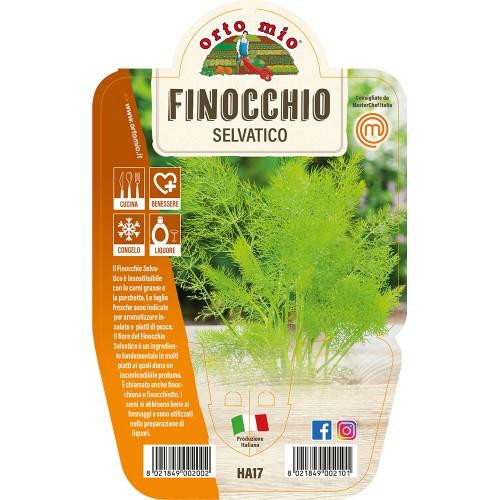 Pianta aromatica Finocchio selvatico V14 Orto Mio