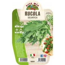 Pianta aromatica Rucola V14 Orto Mio