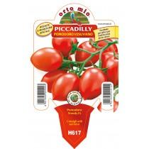 Pianta pomodoro vesuviano Orto Mio varietà Piccadilly