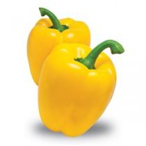 Pianta peperone giallo Orto Mio varietà quadro Mohai