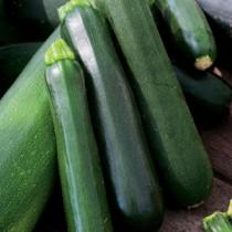 Pianta zucchine Orto Mio varietà Scuro Desert
