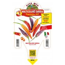 Pianta da orto peperoncino lungo piccante hot multicolore Eureka F1 Orto Mio vaso 14