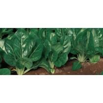Pianta da orto Bietola Orto Mio varietà verde Luisiana