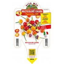 Pianta da orto peperoncino tondo piccante hot multicolore chiara Orto Mio vaso 14