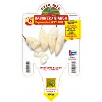 Pianta da orto peperoncino piccante very hot habanero bianco F1 Orto Mio vaso 14
