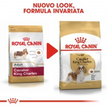 Crocchette per cani Royal Canin cavalier king charles adult 1,5 Kg