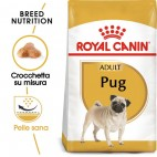 Crocchette per cani Royal Canin carlino pug adult 1,5 Kg