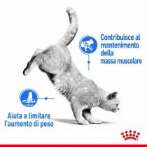 Crocchette per gatti Royal Canin light weight care 38 400 g