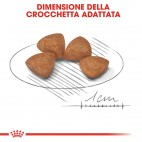 Crocchette per cani Royal Canin x small puppy 500 g