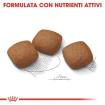 Crocchette per cani Royal Canin maxi joint care 3 Kg