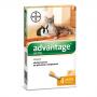 Bayer advantage 40 spot-on gatti e conigli 4 pipette