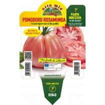 Pianta pomodoro innestata cuore ligure rosa Orto Mio varietà Rosamunda
