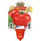 Pianta pomodoro tondo Orto Mio varietà Saraceno