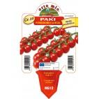 Pianta pomodoro ciliegino Orto Mio varietà Paki