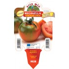 Pianta pomodoro sardo V10 Orto Mio varietà Reginella