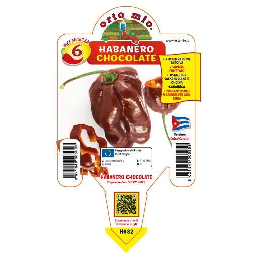 Pianta da orto peperoncino Habanero chocolate Orto Mio
