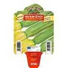 Pianta zucchina romanesco Orto Mio varietà Marzio