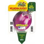 Pianta melanzana tonda lilla innestata V14 Orto Mio varietà Beatrice