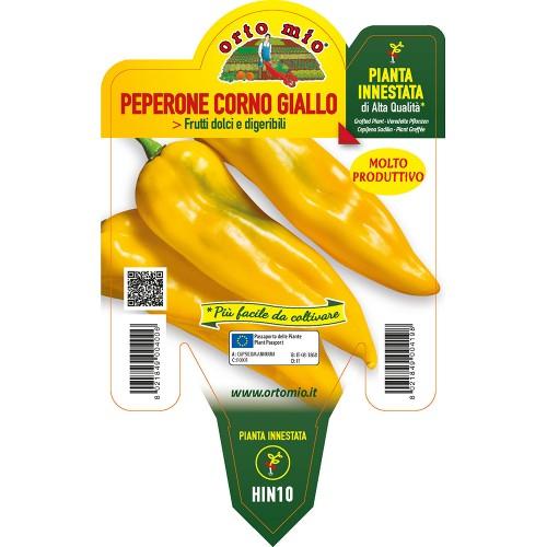 Pianta peperone corno giallo innestata V14 Orto Mio varietà Iside