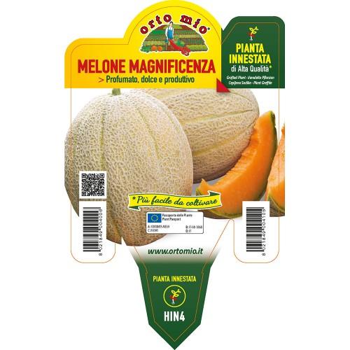Pianta melone retato innestata V14 Orto Mio varietà Magnificenza