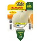 Pianta melone liscio innestata V14 Orto Mio varietà Bacir