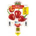 Pianta peperoncino pancho V14 Orto Mio varietà naso del diavolo