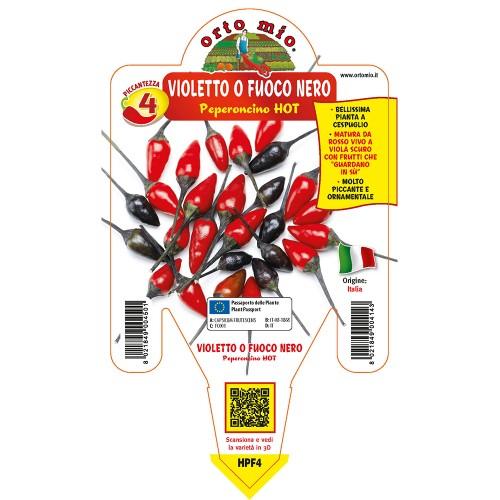 Pianta peperoncino violetto fuoco V14 Orto Mio