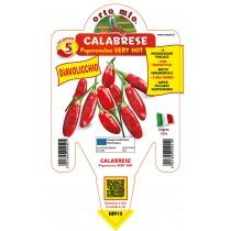 Pianta peperoncino Calabrese V14 Orto Mio varietà Diavolicchio
