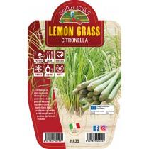Pianta aromatica Lemon Grass V14 Orto Mio