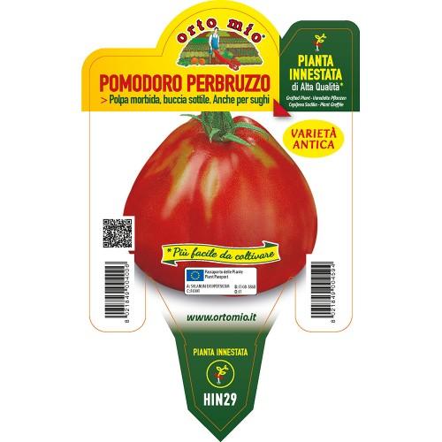 Pianta pomodoro a cuore innestata V14 Orto Mio varietà per d'Abruzzo