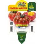 Pianta pomodoro Marmande innestata V14 Orto Mio varietà Maryposa