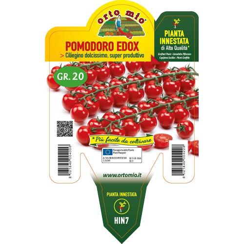 Pianta pomodoro ciliegino innestata V14 Orto Mio varietà Edox