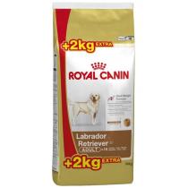 Crocchette per cani Royal canin labrador retriever adult 12 Kg + 2 Kg omaggio gratis