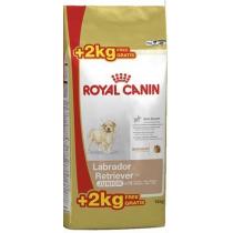 Crocchette per cani Royal canin labrador retriever junior 12 + 2 kg omaggio