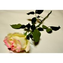 Rosa vera ricoperta di cioccolato bianco fiore colore bianco