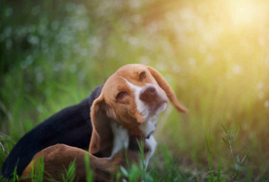 Frontline per cani: ecco pechè è uno dei meno tossici