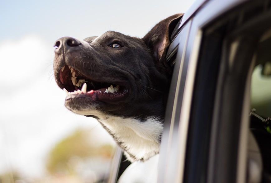 5 buoni consigli per viaggiare con il vostro animale